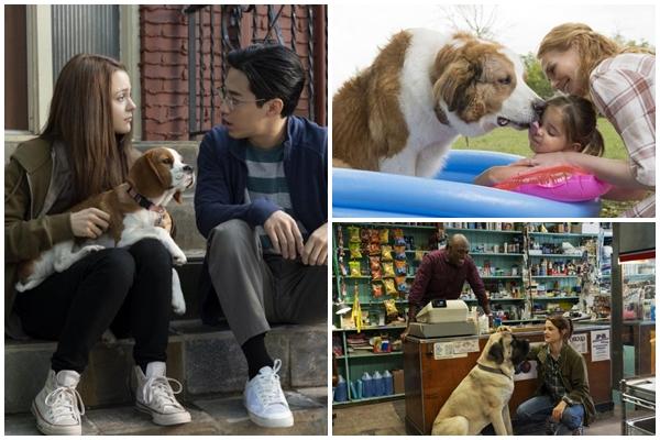 寵物電影推薦狗狗的旅程
